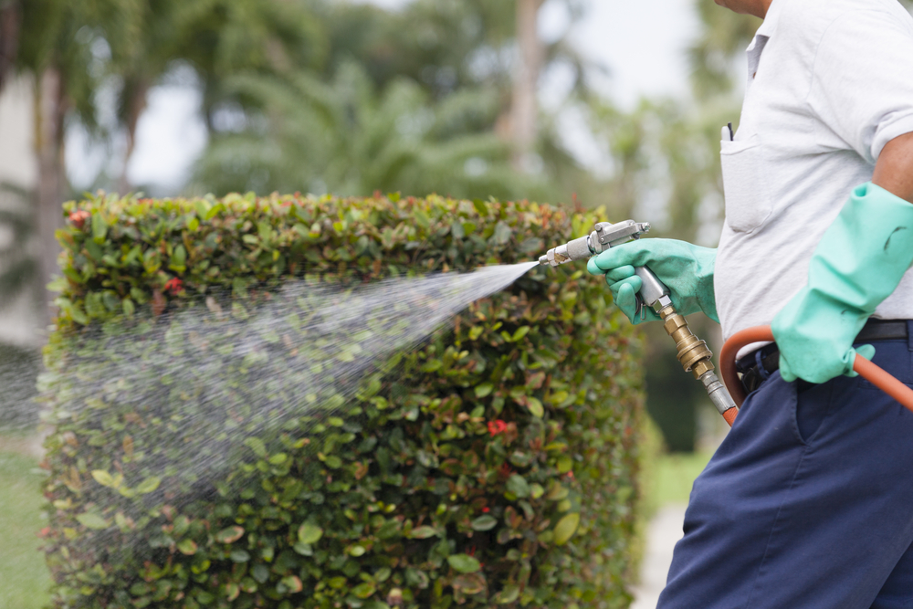 5 Compelling reasons to complete a pre-purchase pest inspection