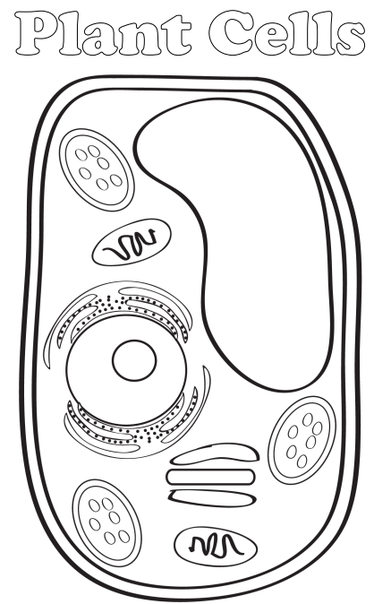 simple plant cell diagram for kids welkom