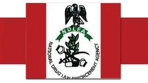 My Logo; NDLEA Shortlisted Candidates