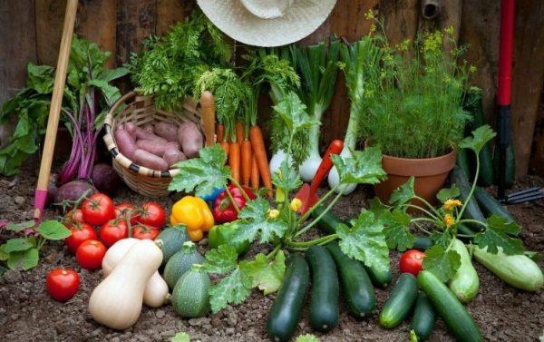 5 Spring Ready Garden Trends for 2018 6