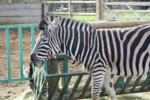 A family day out at Paradise Wildlife Park