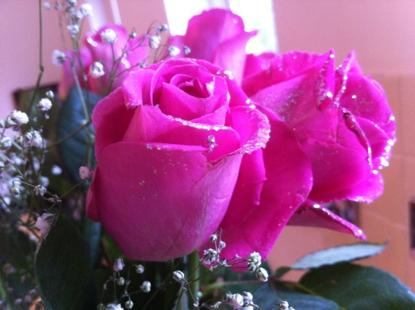 Pink Rose iPhone