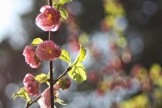 Blossom-spring-garden-365