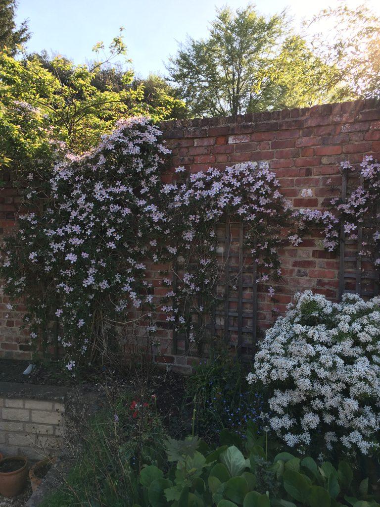 Garden, Flowers, Clematis, Blossom, 365