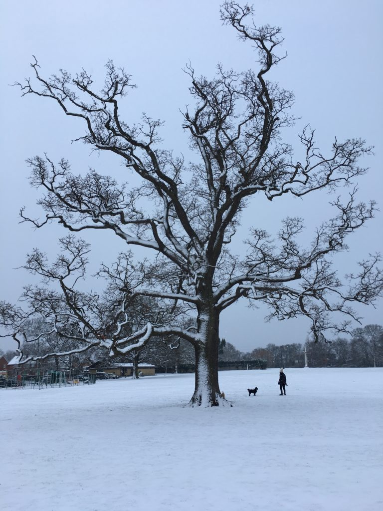Snow, Silent Sunday, Tree, Sunday Snap