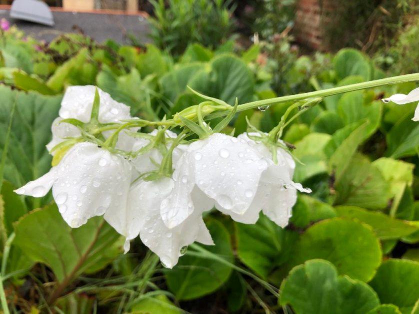 Flower, Rain, Garden, 365