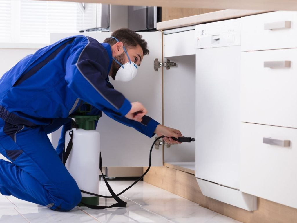 Humane Ways To Get Rid Of Unwanted Pests In Your Home