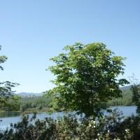 Paseando por La Granja (de San Ildefonso)