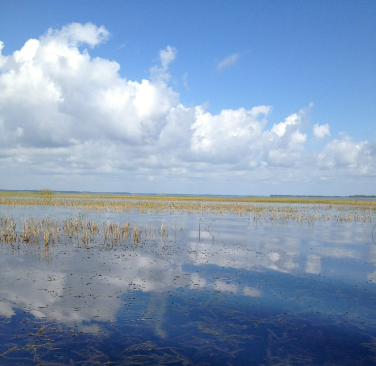 Boggy Creek Airboat Ride. Copyright Gretta Schifano