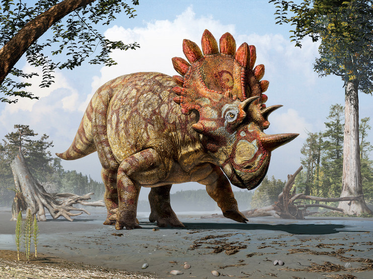 Meet 'Hellboy' - the first of a new dinosaur species discovered in the province of Alberta, Canada. Credit: Art by Julius T. Csotonyi. Courtesy of Royal Tyrrell Museum, Drumheller, Alberta.