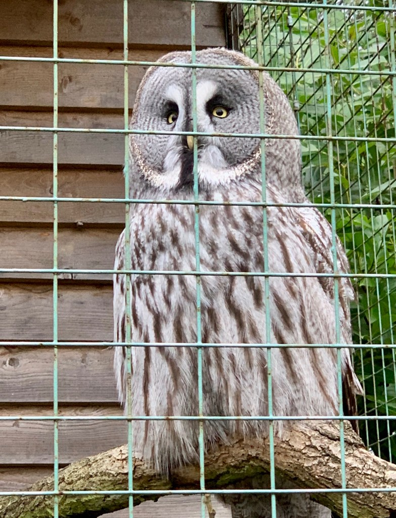 Mums Off Duty, Review of Paradise Wildlife Park