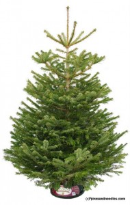 Isabelle's Christmas Advent Calendar: Day 8 - Win A Real 6ft Christmas Tree WINNER ANNOUNCEMENT 3