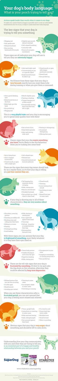 Vitabiotics Dog Body Language Infographic
