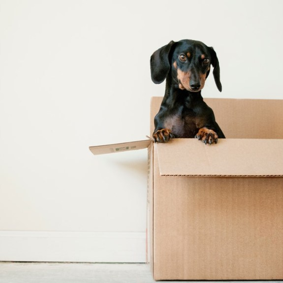 Packing Tips When Moving or Redecorating 6