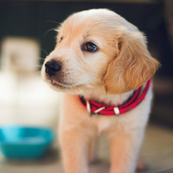 5 Important Things to Consider Before Getting a Dog 6