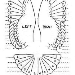 Duck Wing Diagram Kawasaki Wiring Mumtaztic Pigeon Loft - Origin Of The English Tippler