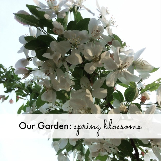 Our Garden: spring blossoms