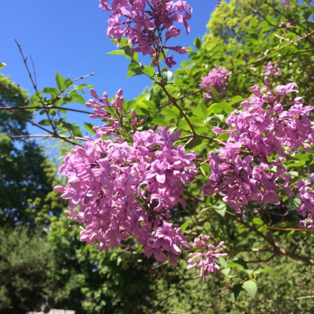Spring Blossoms 11