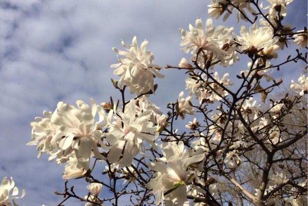 Spring Blossoms 4