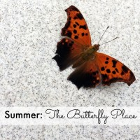 Summer: The Butterfly Place