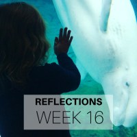 Reflections: Week 16
