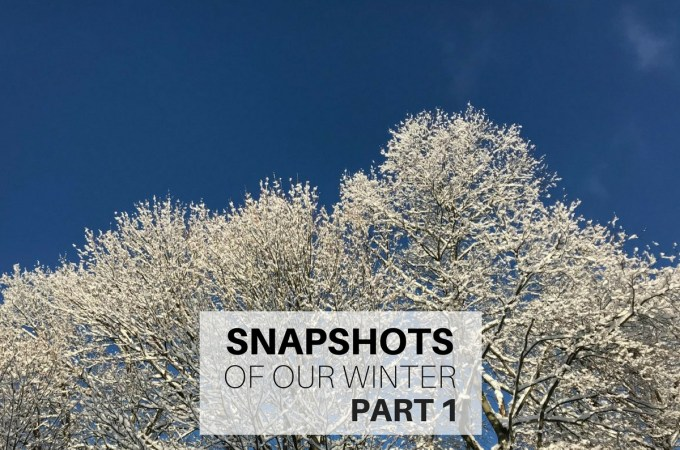Snapshots of our winter Part 1