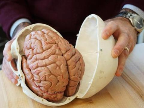 25 Mind-blowing Psychology Facts About the Human Brain