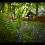 Forest Holidays For Kids ( & Grown Ups Too )
