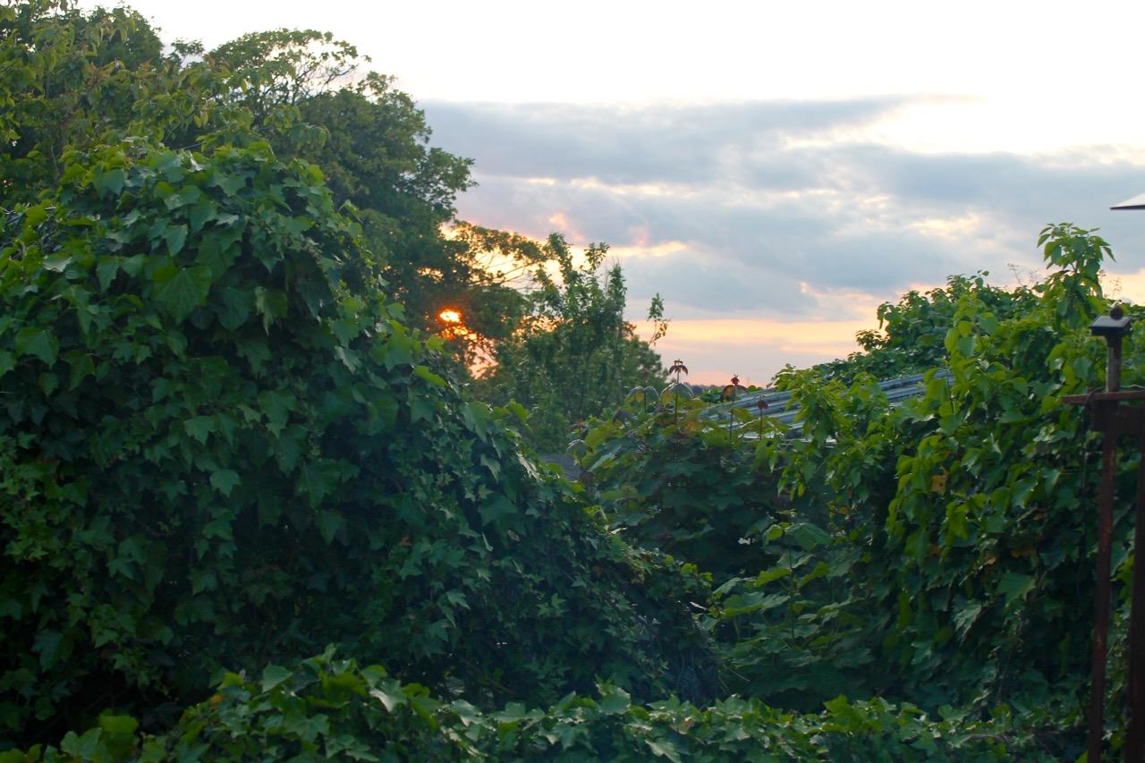 jungle next door