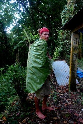 2m Taro leaves