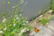these butterflys were so graceful, not like me trying to make pictures of them