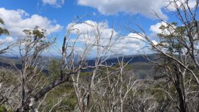 the bushfires destroyed soo many trees, but they didn't burn, they are just dead.