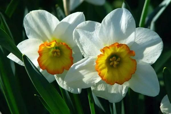 Narciso   ©Wikimedia Commons