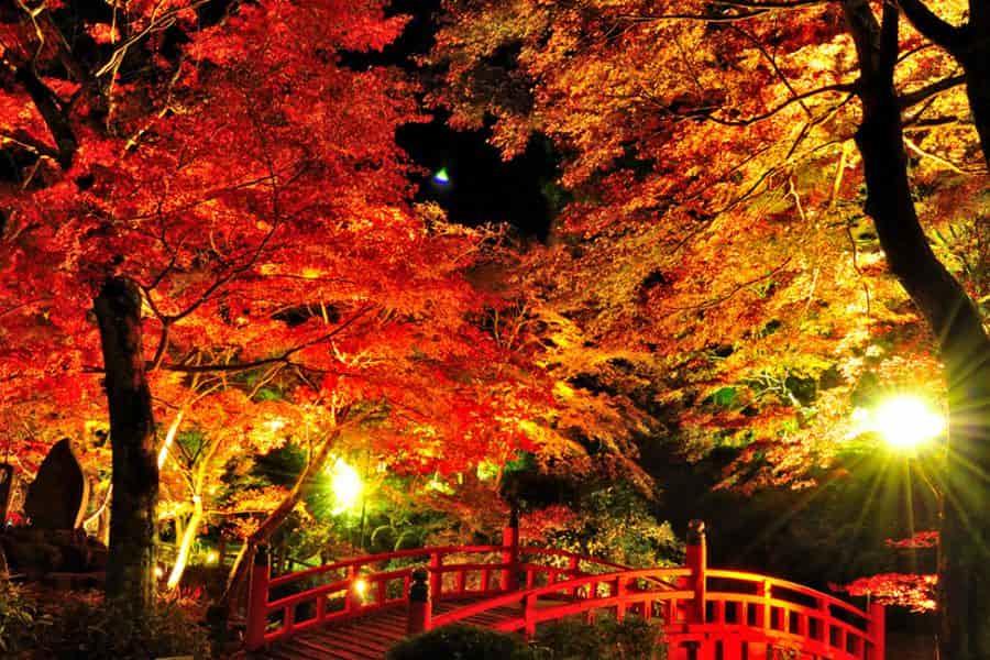 Resultado de imagem para japao no outono a noite