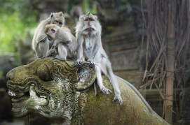 monkeyforestubud2