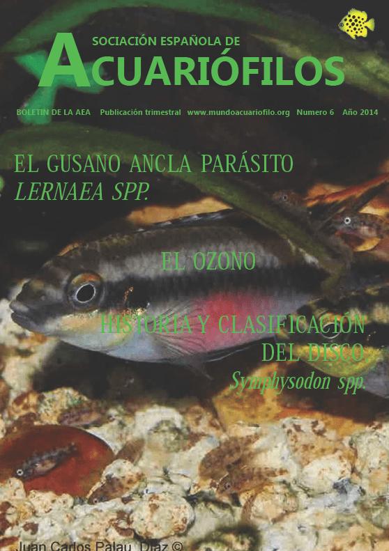 Boletín de la AEA nº6 2013