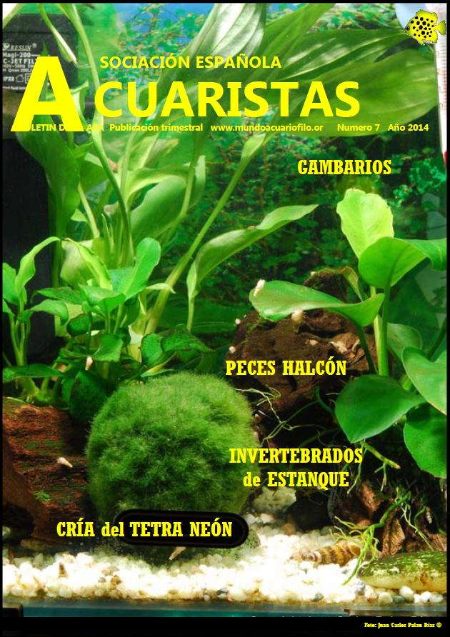 Boletín de la AEA nº7 2014