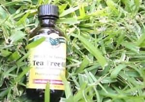 remedio aceite del árbol del te