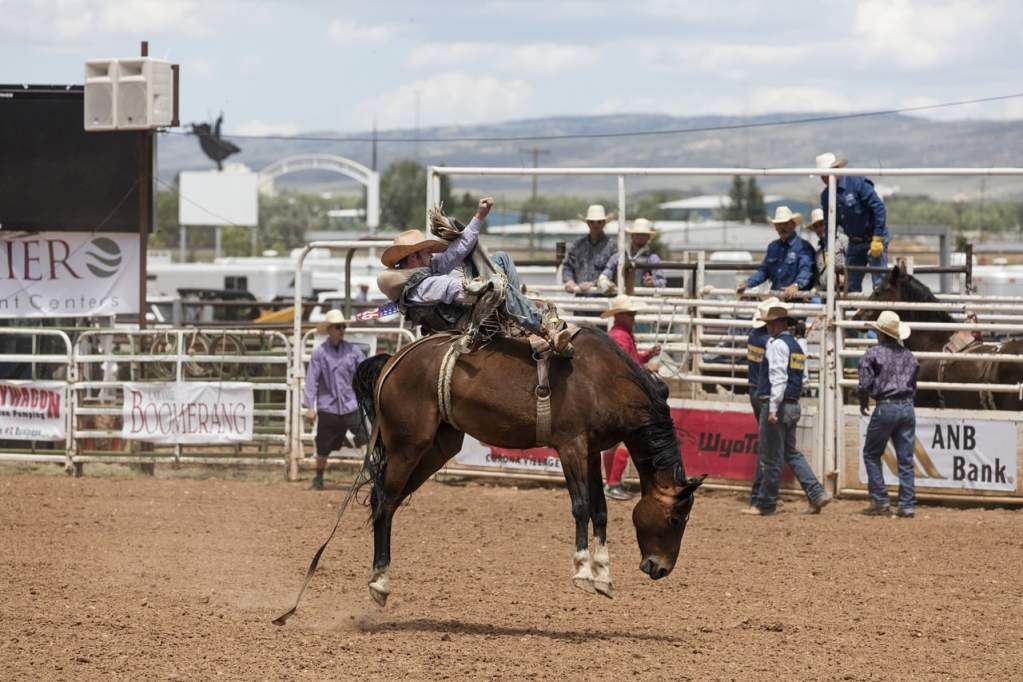 cowboys, bronc rider, rodeo