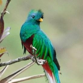 185319 158749530874212 113673238715175 326118 6480680 n e1358192426699 - Galería - fotos del Quetzal, ave nacional de Guatemala