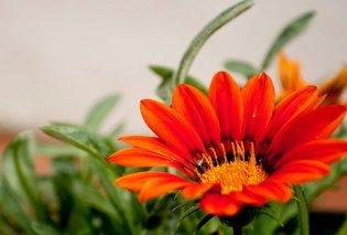 Fotografía de Josué Goge. - Galería - Fotos de Flores