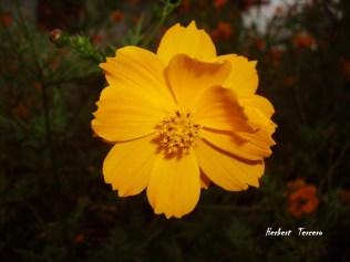 IMG 004 e1360012797776 - Galería - Fotos de Flores