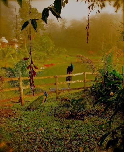 Alta Verapaz foto por Waseem Syed - Galeria - Fotos de Guatemala por Waseem Syed