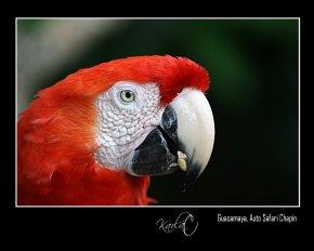 Guacamaya Karla Castellanos - Galeria - Fotos de Guatemala por Karla Castellanos