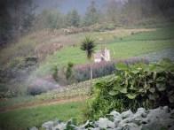Los sueles fertiles son aptos para la Agricultura copia - Guía turística - Fuentes Georginas