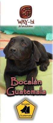 22 - Bocalán Guatemala