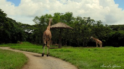 451 - Guía Turística - Auto Safari Chapín