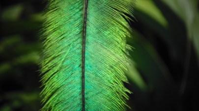 27 - Guía Turística - Ranchitos del Quetzal