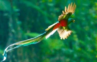 El Quetzal foto por Thorn Janson via TACA Regional - El Quetzal en Guatemala - el pájaro de las plumas verdes