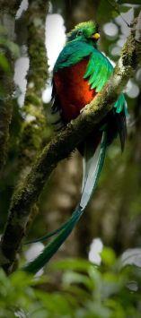 Fotografía de Roberto Quesada - Guía Turística - Ranchitos del Quetzal